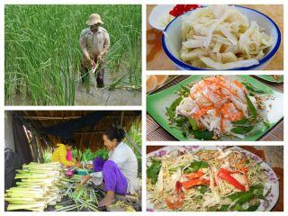 Bồn bồn Cà Mau - đặc sản trời ban cho dân miền đất mũi