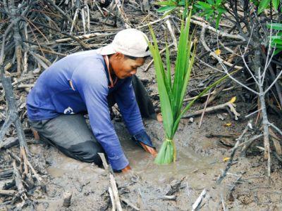 Khám phá rừng ngập mặn có hệ sinh thái đa dạng và độc đáo ở Cà Mau