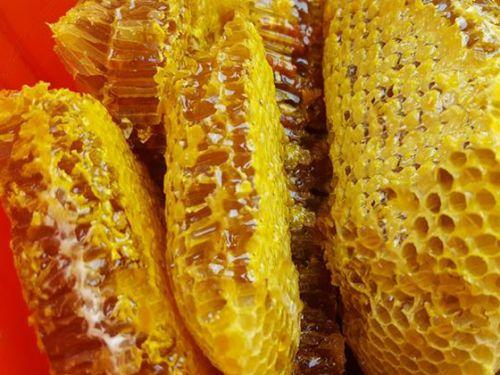 Mật ong rừng nguyên tổ