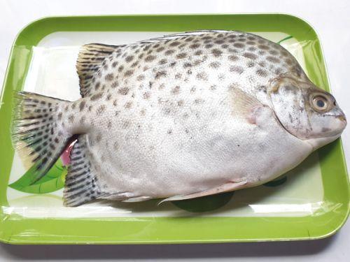 Cá Nâu Cà Mau ảnh 1